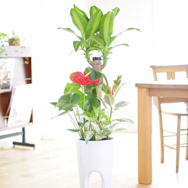 観葉植物 寄せ植え 7号 穴あき白角鉢皿付