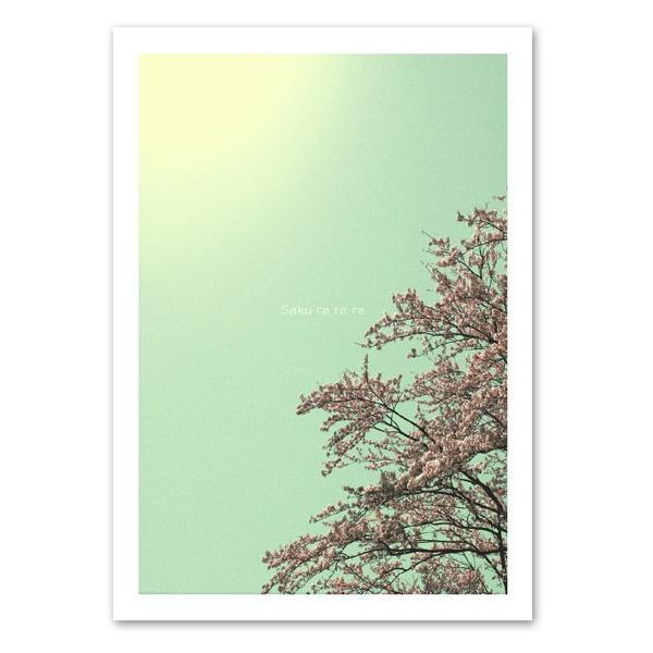 ポスター A2サイズ 『Sakurarara』 インテリア フォト 花,植物 ポスター Interior Art Poster|blankwall