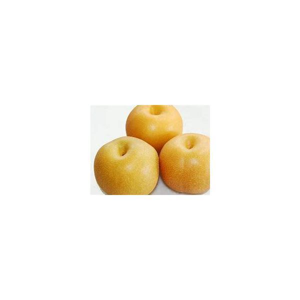 【フルヤの安心フルーツ】特別栽培 和梨(なつしずく・幸水) 10kg(24〜40玉)