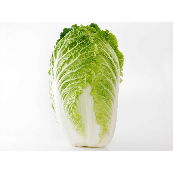 送料無料 【朝市場の新鮮野菜】白菜 6玉サイズ 1個 x2個セット