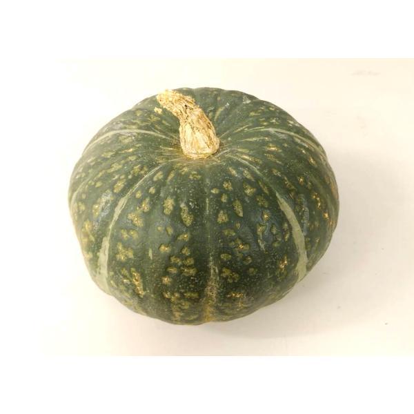 送料無料 【朝市場の新鮮野菜】南瓜 6玉サイズ 1個 x2個セット