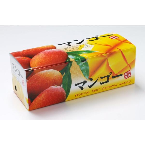 【2021夏ギフト】 沖縄県産 アップルマンゴー 2~4玉 【冷蔵】