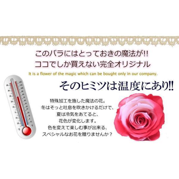 プリザーブドフラワー ギフト ガラスドーム ぬいぐるみと花 誕生日の花 色が変わる魔法のバラ KUMA・KUMA 送料無料|bon-sense|05