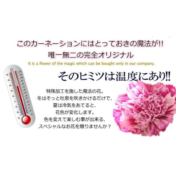 母の日 色が変わる魔法のカーネーション 花 プリザーブドフラワー KUMAKUMAフリル〜|bon-sense|03