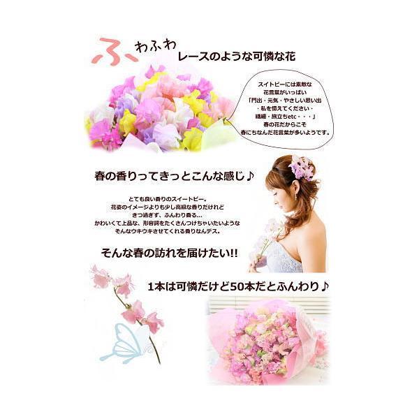 スイートピー50本の花束/プレゼント ギフト 誕生日プレゼント スイトピー|bon-sense|02