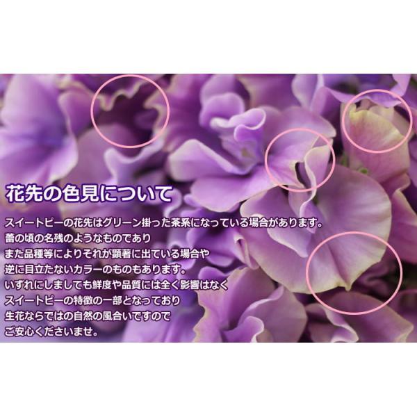 スイートピー50本の花束/プレゼント ギフト 誕生日プレゼント スイトピー|bon-sense|04