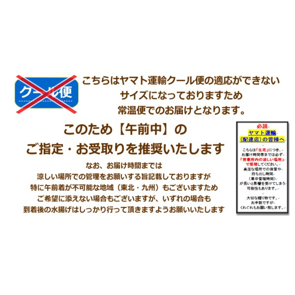 「ひまわり 50本 花束」 花 ギフト 誕生日の花|bon-sense|04