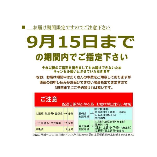 「ひまわり 50本 花束」 花 ギフト 誕生日の花|bon-sense|06