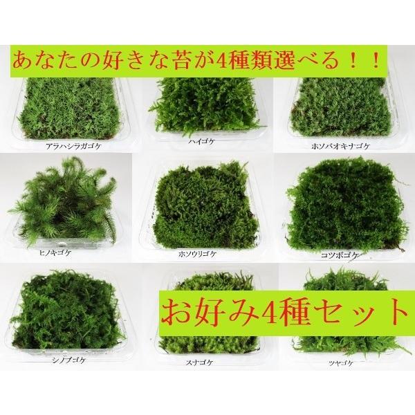 苔盆栽 テラリウム の 苔 選べる こけ お好み コケ 4種 セット 【 送料無料 】 bonsai-shobien
