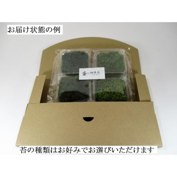 苔盆栽 テラリウム の 苔 選べる こけ お好み コケ 4種 セット 【 送料無料 】 bonsai-shobien 04