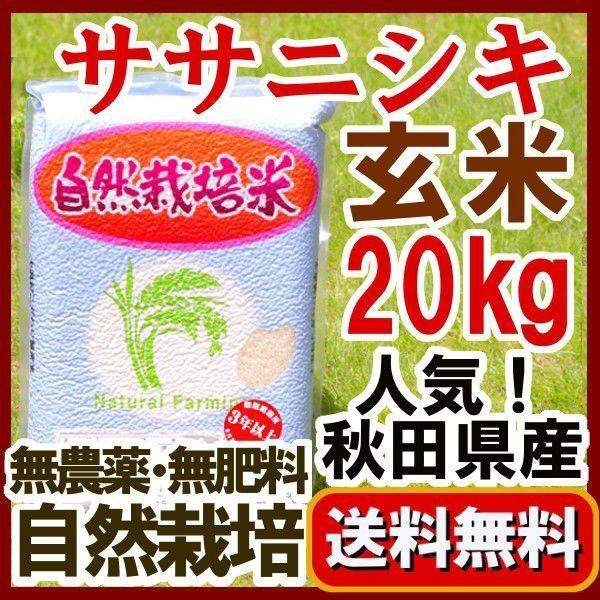 ササニシキ 無農薬玄米 20kg 2020年産(令和2年)自然栽培米 秋田県 大潟村 石山農産