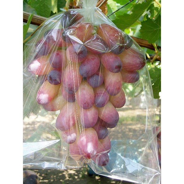 BIKOO - L 大 (250×350) サイズ (農産物保護用袋) 100枚入|budoukan-shop|04