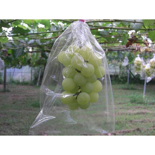 BIKOO - L 大 (250×350) サイズ (農産物保護用袋) 100枚入|budoukan-shop|05