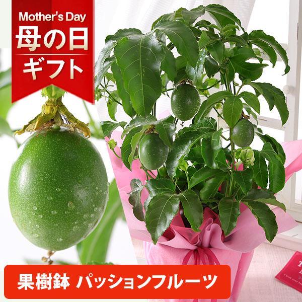 母の日2021花ギフトプレゼント 4/2523時59分早割実施中  鉢植えシャクナゲカルミアバラ薔薇カーネーションアレンジメント