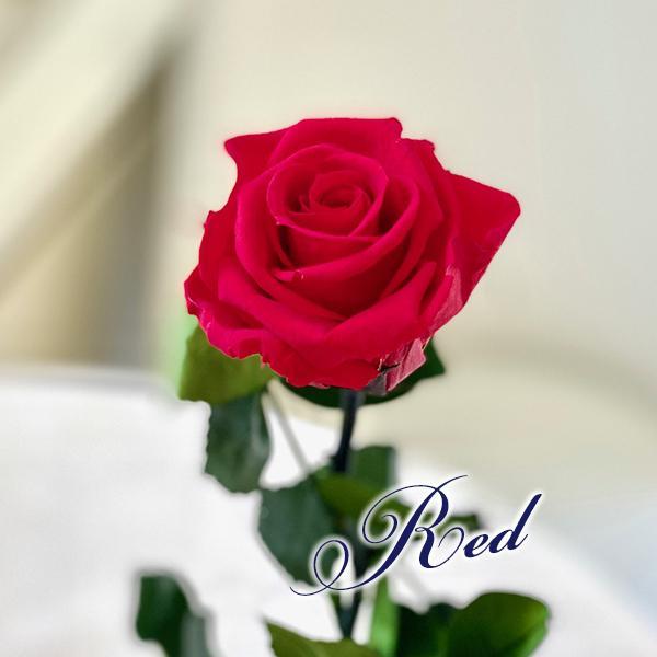 プリザーブドフラワー バラ1輪 ボックス おしゃれ 記念日 誕生日 プレゼント プロポーズ お祝い ギフト cafura 02