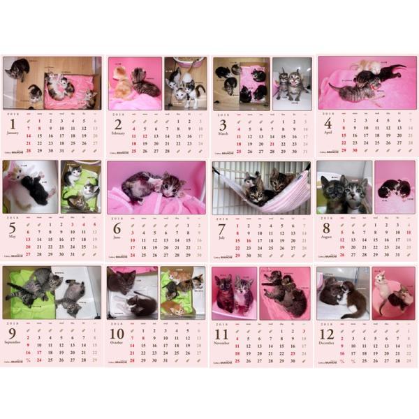 【ネコポス便可能】2018年 Cattery BRANCHE チャリティー卓上カレンダー /猫/ネコ/ねこ/子猫/乳飲み猫/|cattery-branche