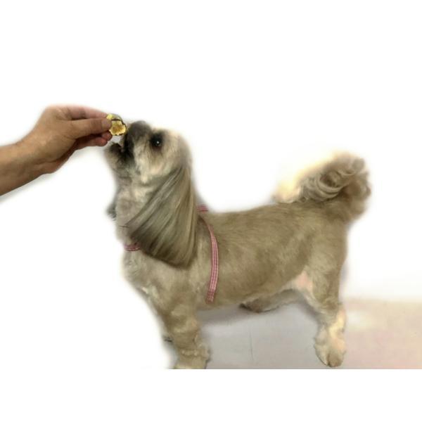 ズッキーニチップス 【犬のおやつ 無添加】【犬のおやつ 野菜】完全無添加 北海道産 ノンフライ・ノンオイル ノンシュガー アレルギーのあるわんちゃんに 20g cbdog 05