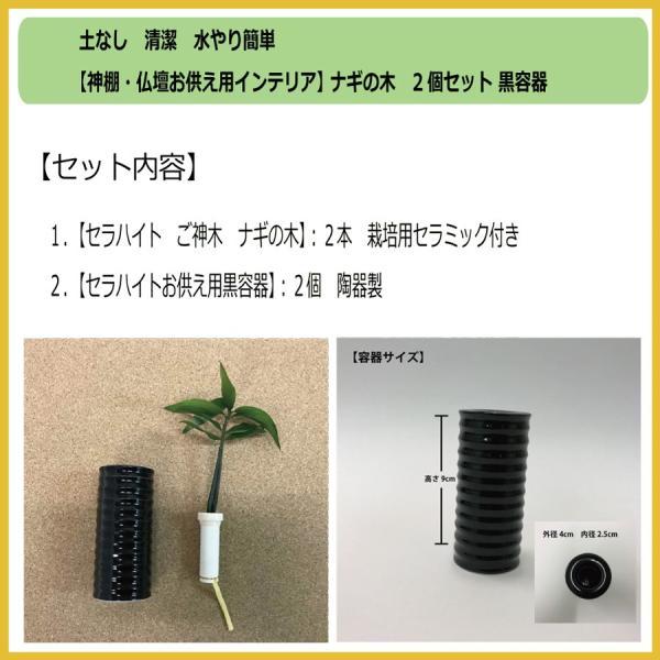 【神棚・仏壇お供え用植物】 ナギの木 2個セット 黒容器|ceraphyto-world|02