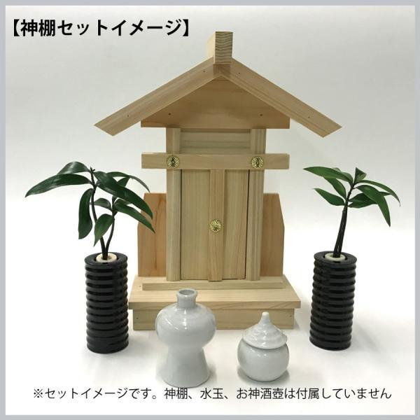 【神棚・仏壇お供え用植物】 ナギの木 2個セット 黒容器|ceraphyto-world|04