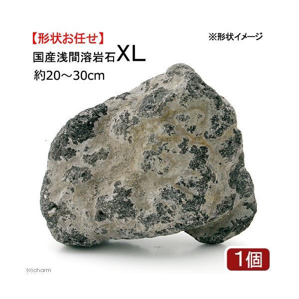 国産浅間溶岩石XL 1ヶ 約23〜30cm