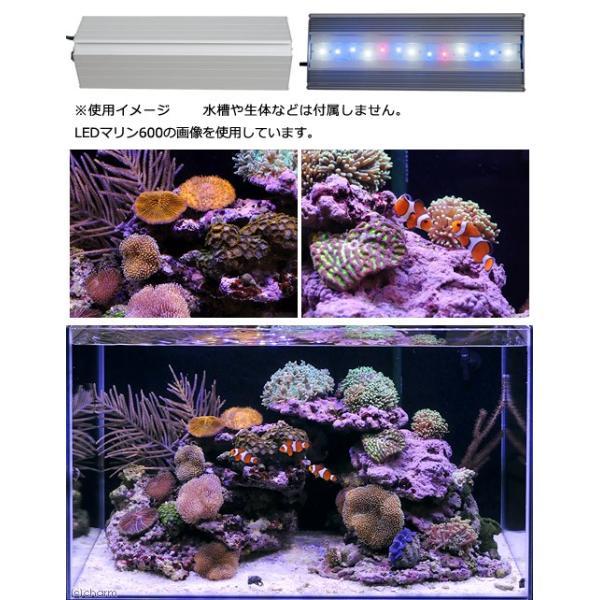 アクロ TRIANGLE LED MARINE 300 20000K Aqullo Series 沖縄別途送料 関東当日便|chanet|02