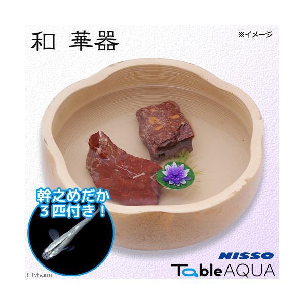 (めだか)ニッソーテーブルアクア和華器幹之メダカ3匹付き本州四国