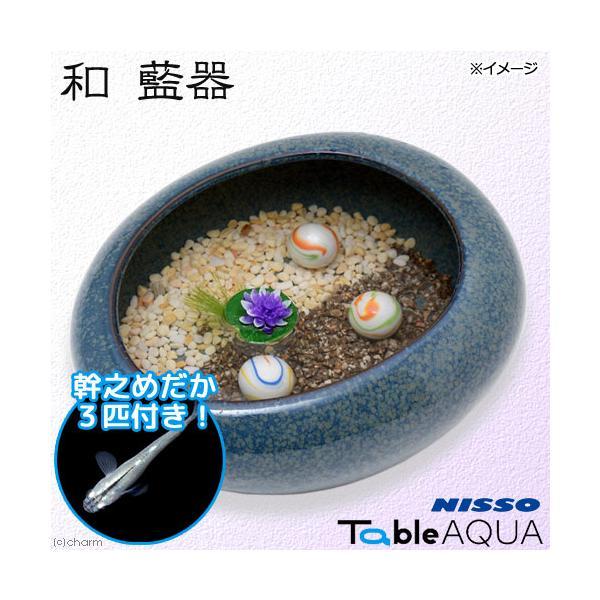 (めだか)ニッソーテーブルアクア和藍器幹之メダカ3匹付き本州四国