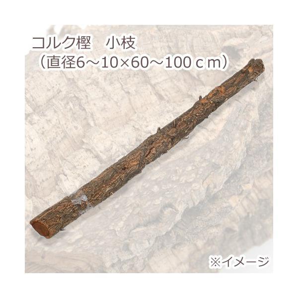 コルク樫 小枝 (直径6〜10×60〜100cm) 園芸 素材 爬虫類 レイアウト 関東当日便 chanet