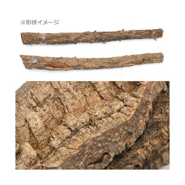 コルク樫 小枝 (直径6〜10×60〜100cm) 園芸 素材 爬虫類 レイアウト 関東当日便 chanet 02