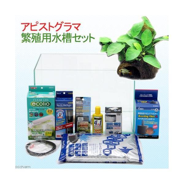 (水草)アピストグラマ繁殖用水槽セット 本州・四国限定|chanet