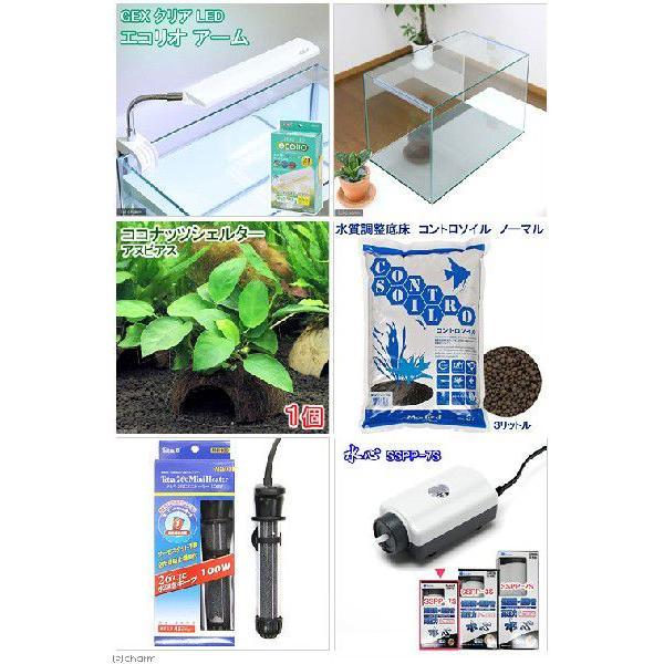 (水草)アピストグラマ繁殖用水槽セット 本州・四国限定|chanet|02