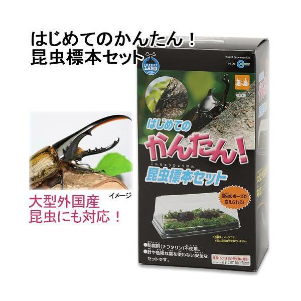 マルカン はじめてのかんたん昆虫標本セット 昆虫標本 昆虫採集 自由研究 関東当日便 chanet