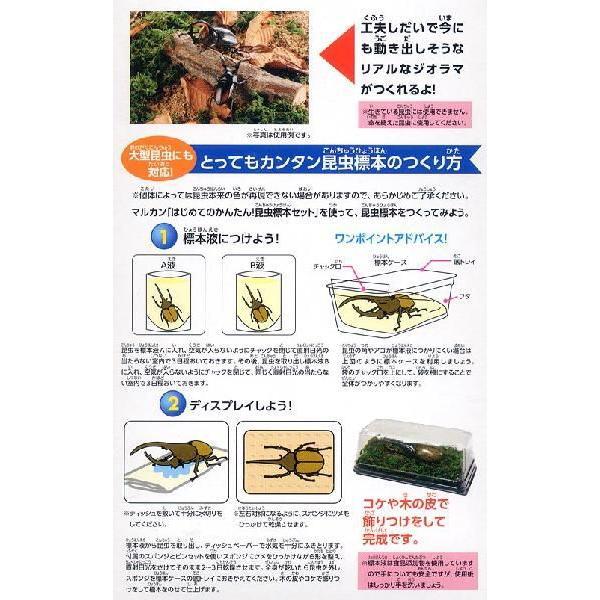 マルカン はじめてのかんたん昆虫標本セット 昆虫標本 昆虫採集 自由研究 関東当日便 chanet 03