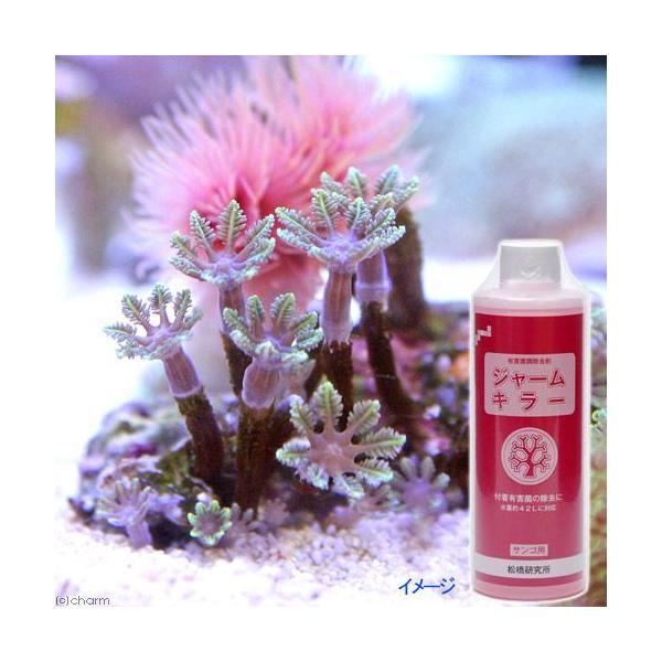 有害菌類除去剤 ジャームキラー サンゴ用 250ml 抗菌剤 トリートメント 海水専用 関東当日便|chanet|02