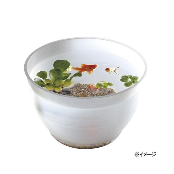 スドー金魚の小鉢しらゆき(白雪)金魚鉢