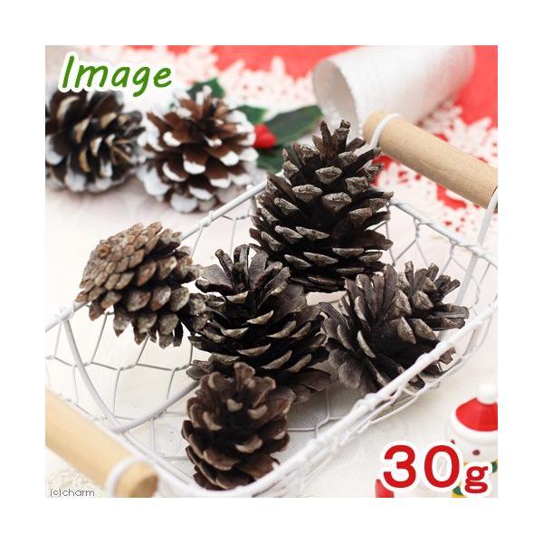 長野県産 松ぼっくり 30g クリスマス