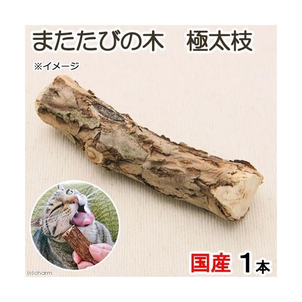 国産 またたびの木 極太枝 1本入り 猫用おもちゃ 無添加 無着色