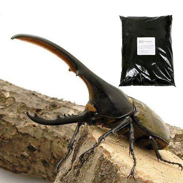 |(昆虫)ヘラクレス・ヘラクレス幼虫(3匹)+B10 かぶとマット 10L 本州四国限定