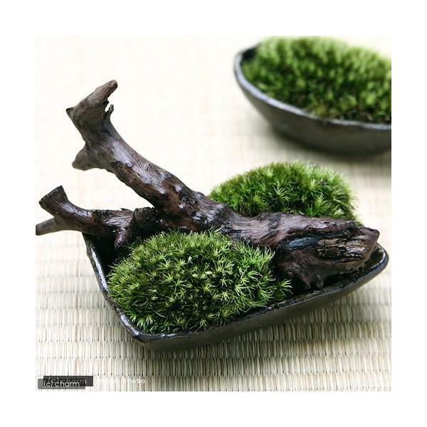 植物×益子焼 和のコラボレーション