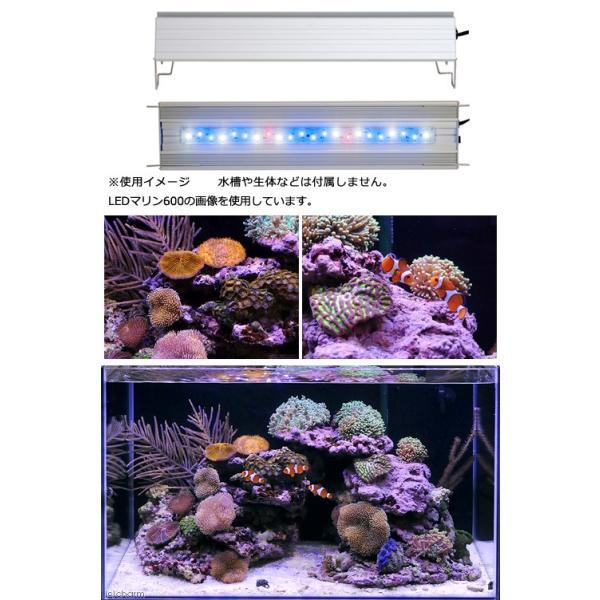 アクロ TRIANGLE LED MARINE 450 Aqullo Series 沖縄別途送料 関東当日便|chanet|02