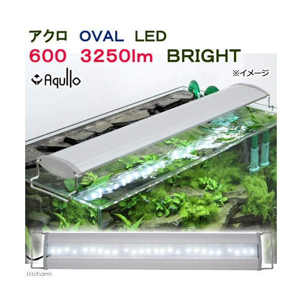 アクロ OVAL LED 600 3250lm BRIGHT Aqullo Series 60cm水槽用照明 沖縄別途送料