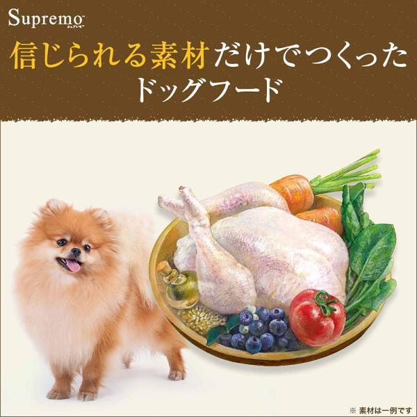 ニュートロ シュプレモ 子犬用 小粒 3kg 関東当日便|chanet|02