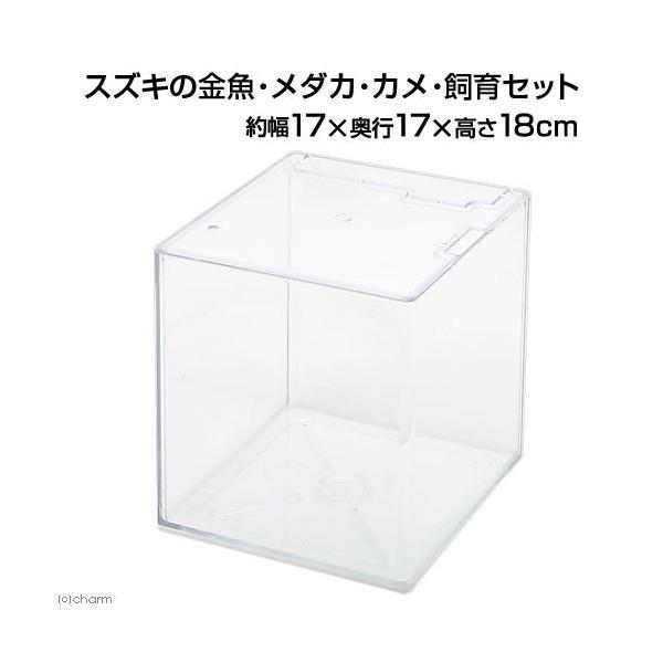 スズキの金魚・メダカ・カメ・飼育セット(幅17×奥行き17×高さ18cm)