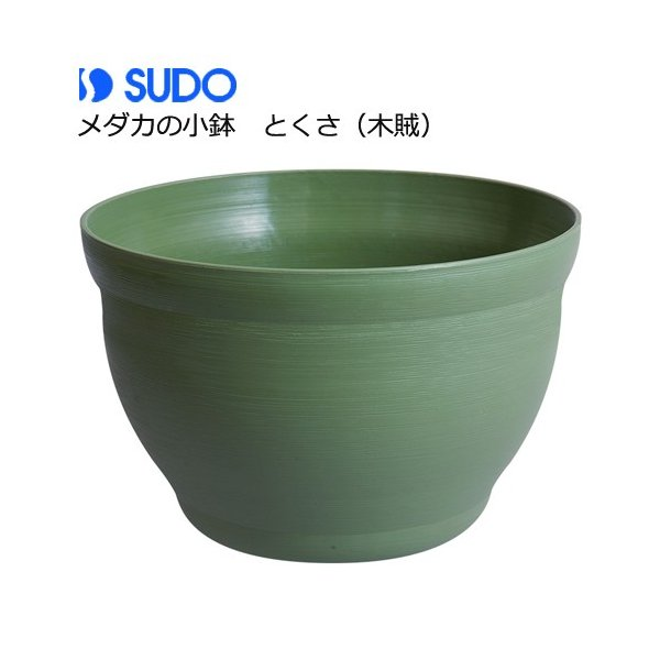 スドーメダカの小鉢とくさ(木賊)