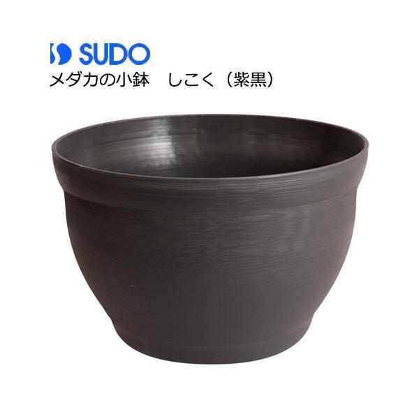 スドーメダカの小鉢しこく(紫黒)