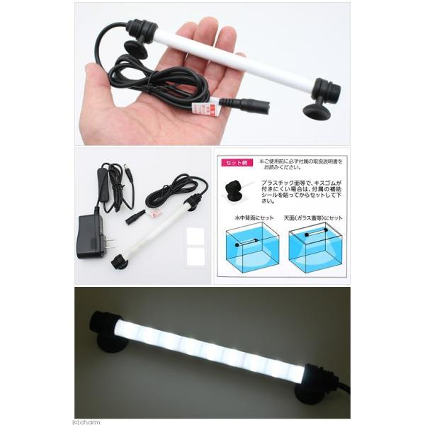 エヴァリス クォーツグラスチューブ LED S150 アクアリウムライト 関東当日便|chanet|02