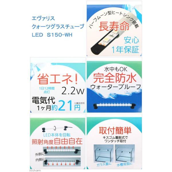 エヴァリス クォーツグラスチューブ LED S150 アクアリウムライト 関東当日便|chanet|03