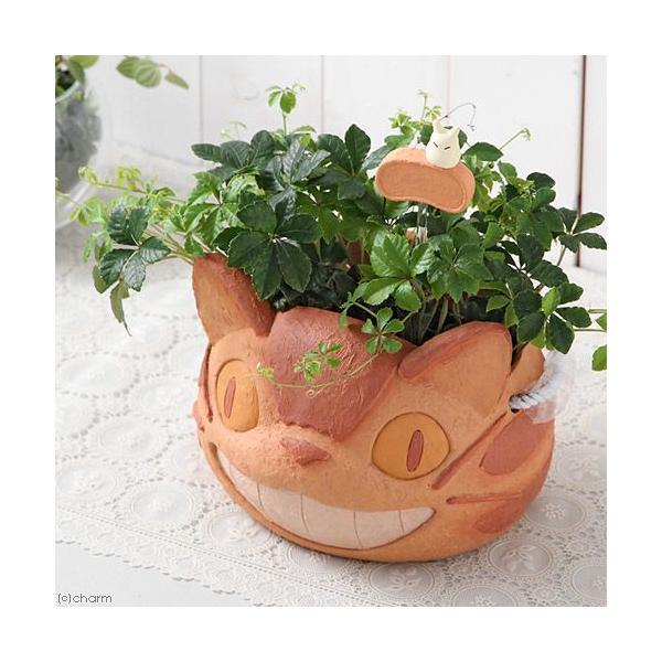 トトロ、ネコバス、ロボット兵、魔女の宅急便 ジブリの観葉植物セット