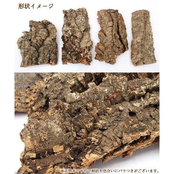 天然バージンコルクディスプレイ Mサイズ(20〜35cm前後) 約200g 関東当日便|chanet|02
