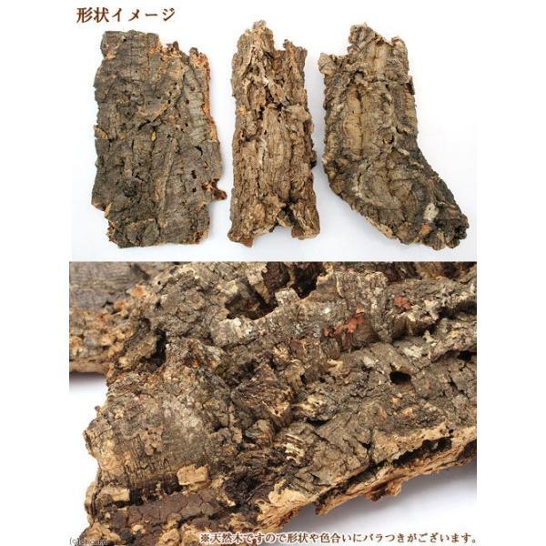 天然バージンコルクディスプレイ M(25〜35cm前後) 約500g 関東当日便|chanet|02
